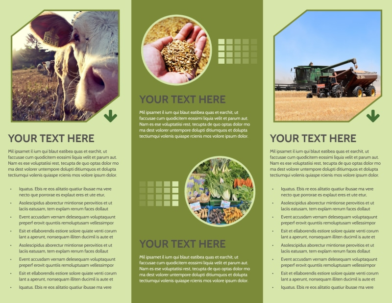 Agricultural Marketing Firm Brochure Template Preview 3