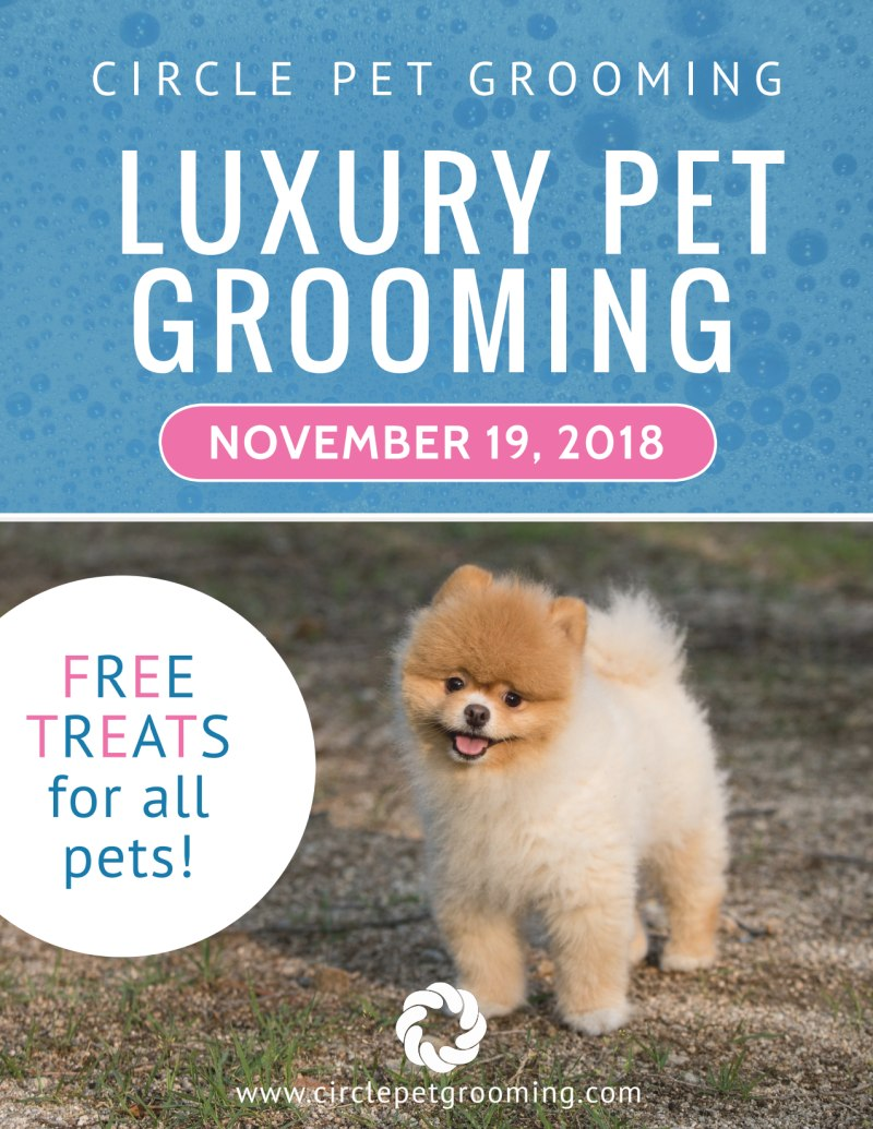 Luxury Pet Grooming Flyer Template Preview 2