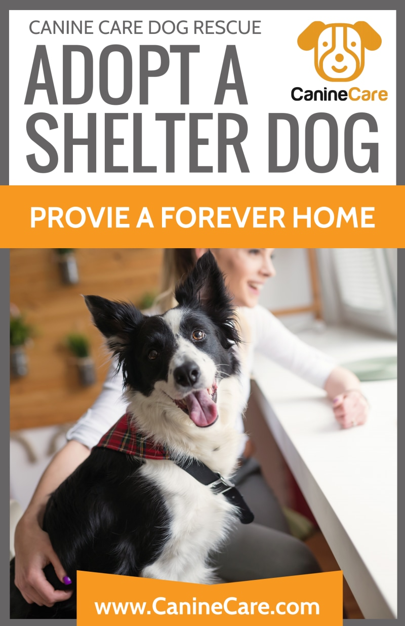 Pet Adoption Shelter Poster Template Preview 2
