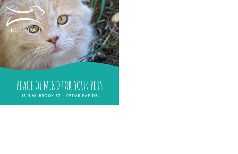 Simple Pet Sitting Postcard Template Preview 3