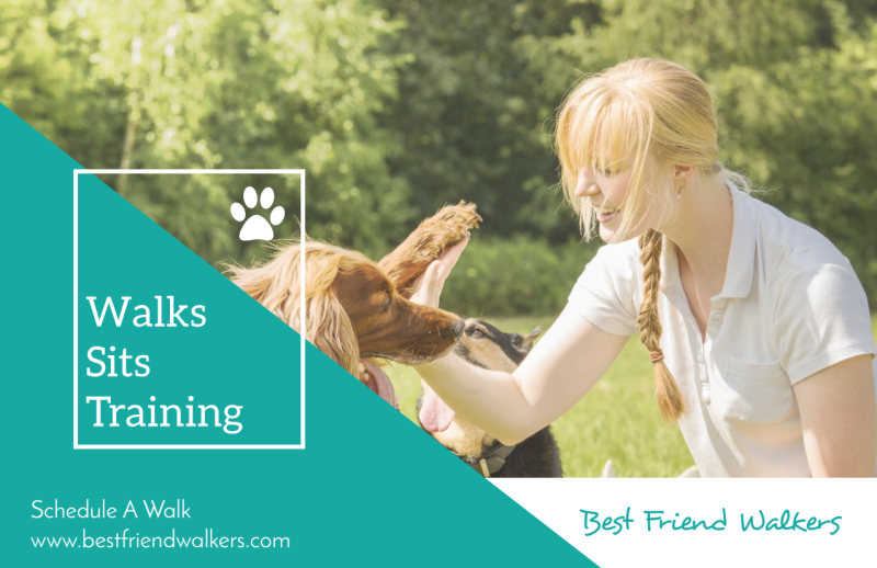 Dog Walk Postcard Template Preview 2