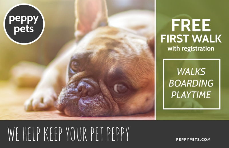 Dog Walking Promo Postcard Template Preview 2
