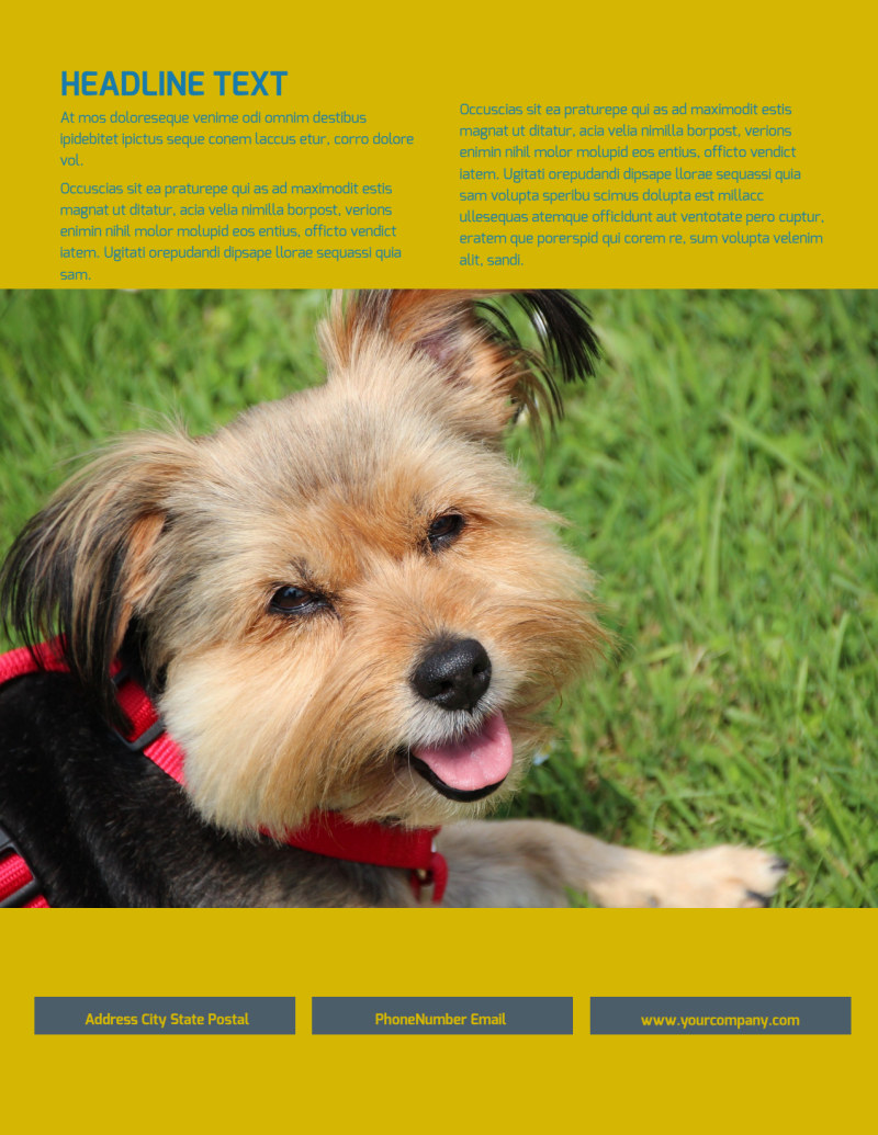 Pet Grooming Bundle Flyer Template Preview 3