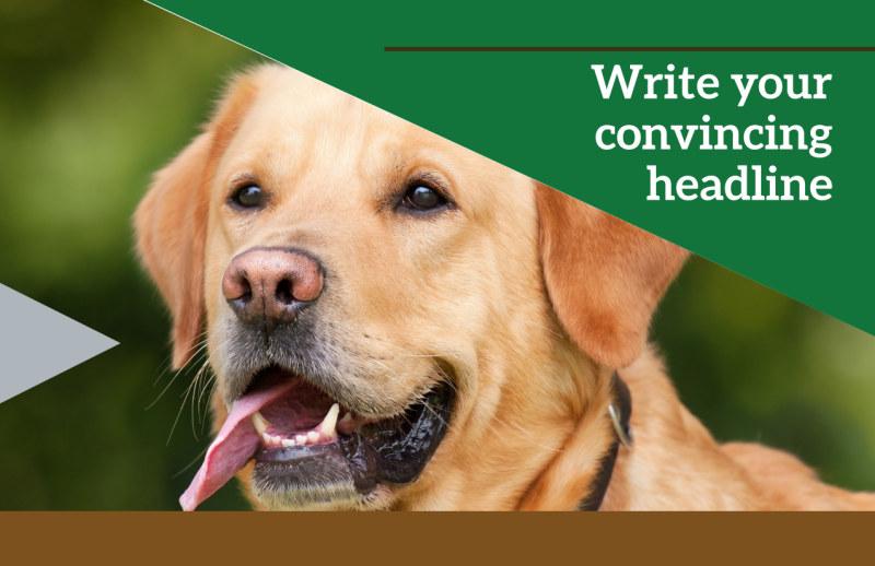 Pet Kennels Postcard Template Preview 2